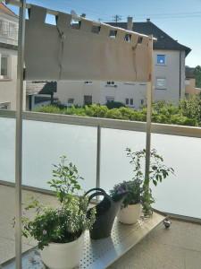 Windschutz Sichtschutz (9)